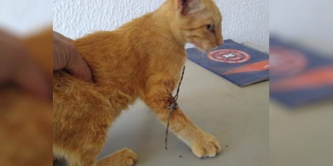 Homem viu animal machucado na rua e o levou até quartel para pedir ajuda. Segundo tenente, um dos bombeiros que estava de plantão é enfermeiro, o que facilitou a retirada do arame.