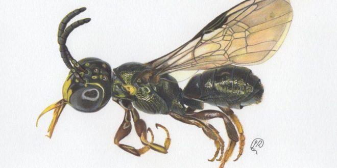 Pesquisadores descobrem nova espécie de abelha em fazenda de Água Fria de Goiás