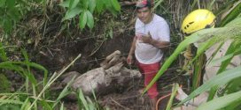 Bombeiros é acionado para retirar uma égua que havia caído em uma grota no setor sul em  Goianésia