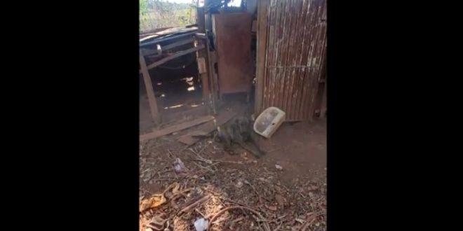 Homem é preso em Rubiataba por suspeita de maus-tratos a animal