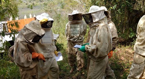 Anglo American lança programa voltado a pequenos produtores de leite e mel de Barro Alto, Niquelândia e Santa Rita